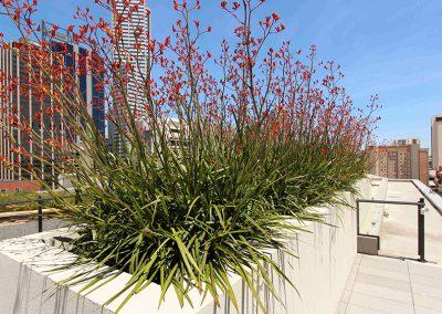 William Street Roof Top Garden