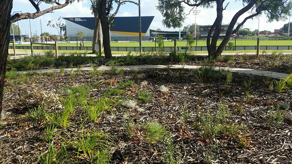 Lathlain Park- Aquamor Mulch & Aquamor Soil Improver